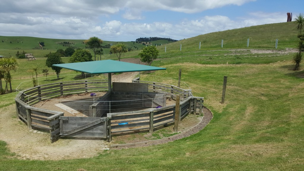 Gibbs Farm Zebra Enclosure